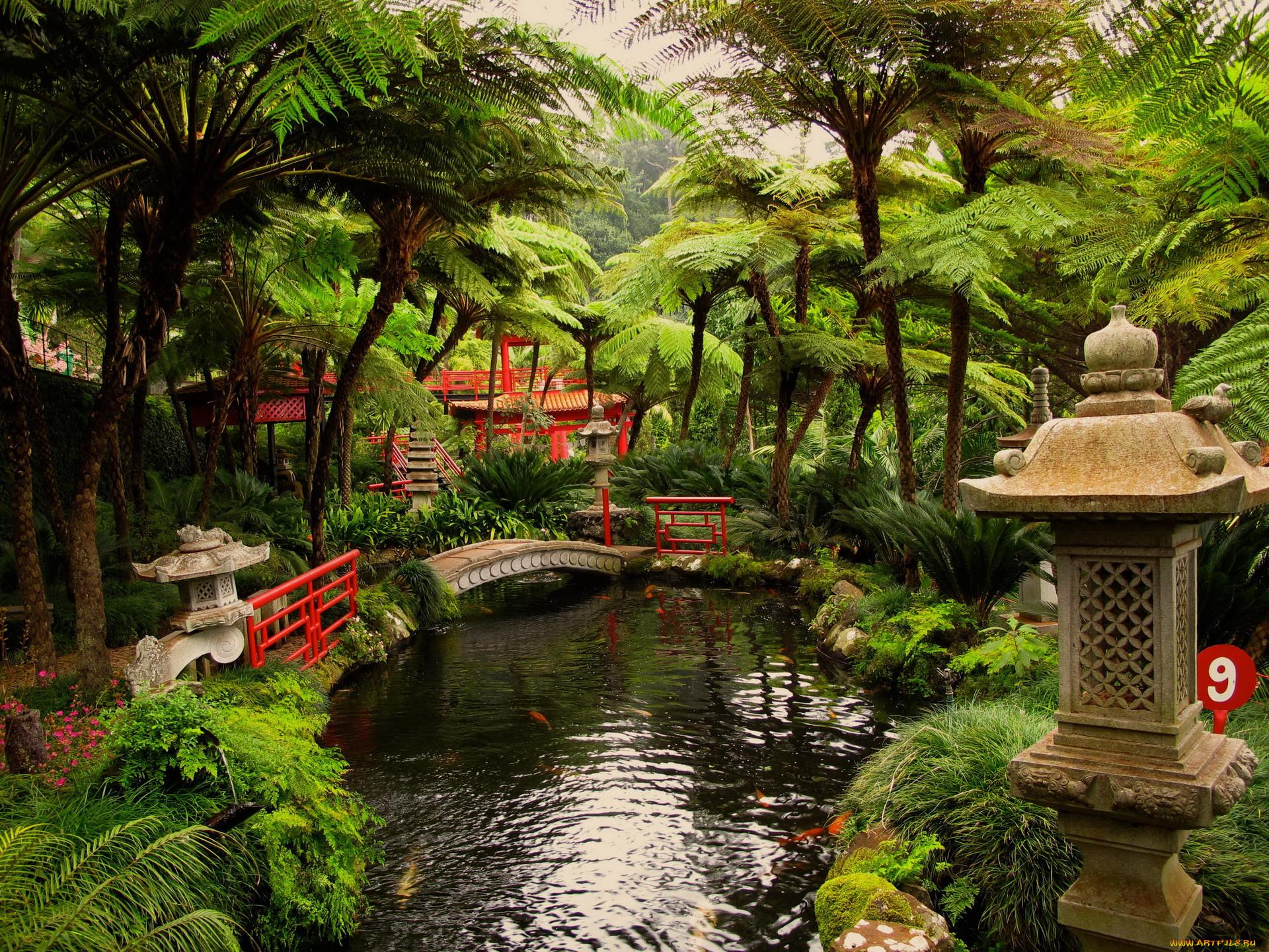 Сад природа парк обои для рабочего